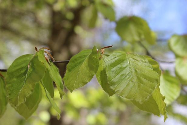 Frisches Grün